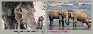 elephant-communicating-copy